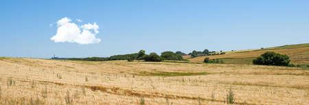 wheatfield: A landscape photo of rape wheat field