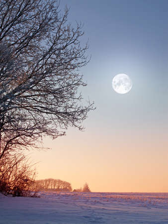 A photo of the moon and winter landscape Stock Photo - 17348007