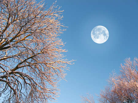 A photo of the moon and winter landscape Stock Photo - 17348391