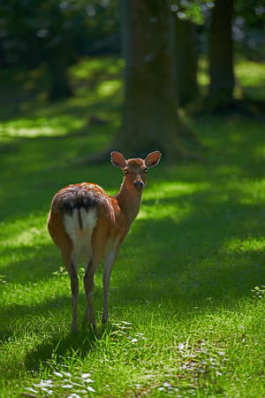 a telephoto of a deer