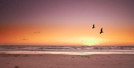 A photo of beach sunset and sea gulls