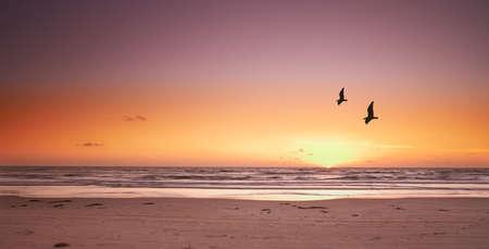 beach sunset: A photo of beach sunset and sea gulls