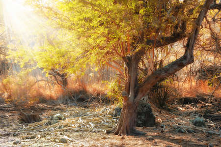 dead tree: A photo of African wilderness