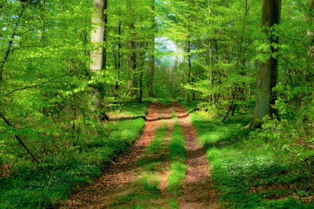 early summer: A photo of a beautiful forest