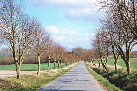 A photo of trees and road in early autumn photo