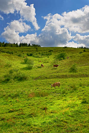 A landscape photo of hill, green field and cow photo
