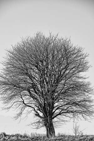 An image of an lonely tree photo