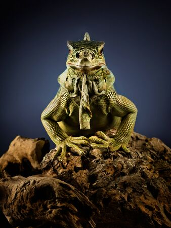 creepy monster: Un iguana verde su un ramo di albero.