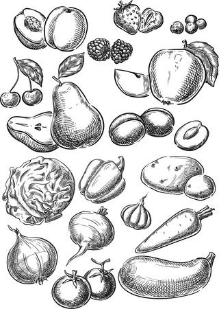 Ensemble de vecteur conceptuel créatif. Croquis dessinés à la main fruits légumes poire cerise pomme fraise carotte tomate illustration, gravure, encre, dessin au trait, vecteur. Vecteurs