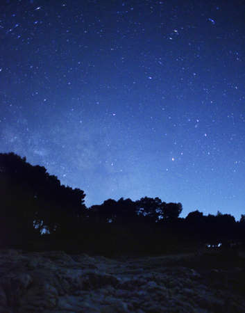 night sky stars: Night landscape with stars and forest