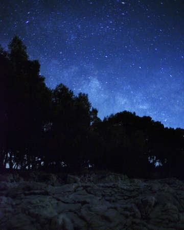 Night landscape with stars and forest photo