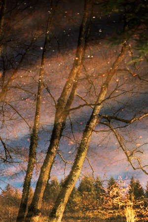Water reflection of trees in river Stock Photo - 12966635