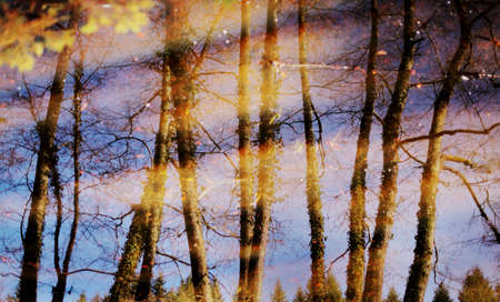 Water reflection of trees in river Stock Photo - 12966718