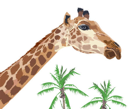 Beautiful adult Giraffe with coconut tree. illustration isolated on white background