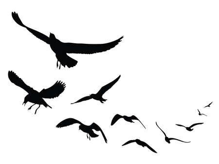 seagull silhouette on white background, Illustration Imagens - 66754951