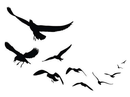 Silhouette mouette sur fond blanc, Illustration Banque d'images - 66754951