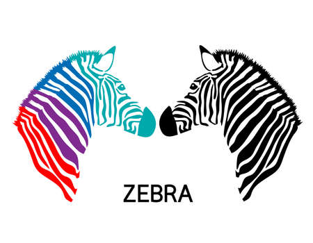 zebra skin: Zebra head. drawn and outlined in illustration. Simple flat style. isolated on white background.