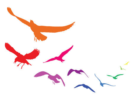 Colorful silhouettes of flying seagulls,  illustration birds, isolated on white background