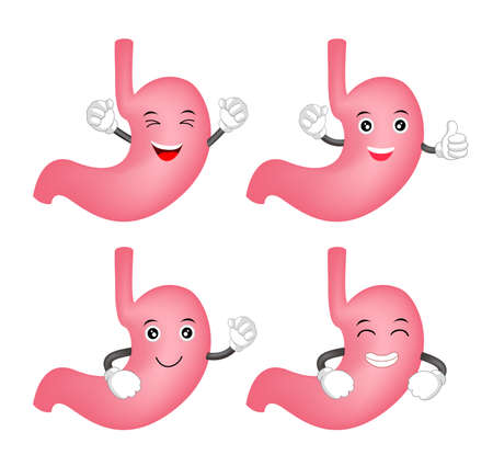 Happy cartoon stomach character set. Healthy internal organ concept. Illustration isolated on white background. Illustration