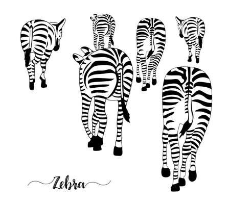 Groupe de zèbres, pose à l'arrière. Rayé noir et blanc. Vector illustration isolé sur fond blanc. Vecteurs