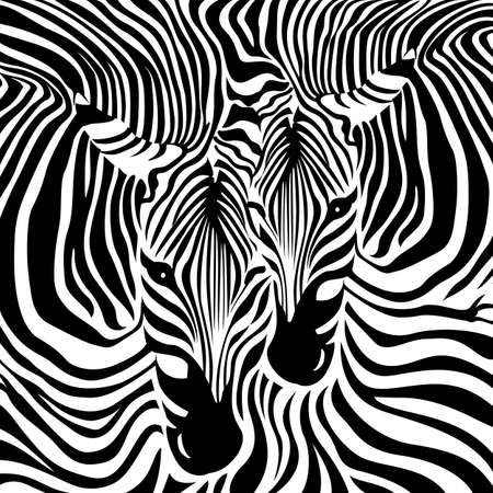 Zebra Couple background. Black and white, vector illustration. Animal skin print texture.
