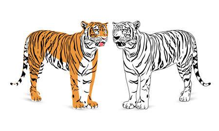 bengal: Tiger silhouette illustration. Wild life animals. isolated on  white background. Illustration