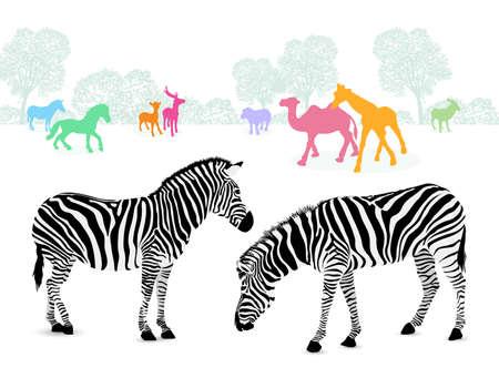 Zebra couple with colorful silhouette animals. illustration isolated on white background. Illustration