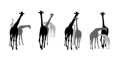 Family group of black and grey giraffes silhouettes. Wild animal, vector illustration isolate on white background.
