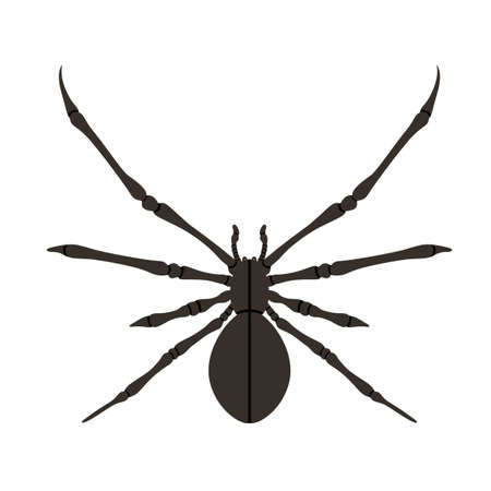 Spider silhouette in black. Poisonous animal design. Happy Halloween concept.