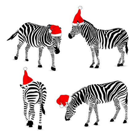 Set of zebra wearing santa hat.  Wild animal texture. Striped black and gray.  vector illustration isolated on white background. Illustration