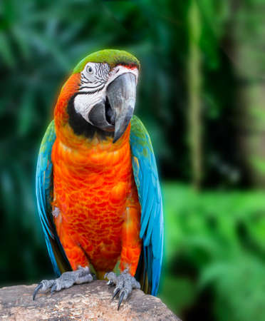 Macaw parrot, Colorful bird perching on branch. Portrait of amazon's parrot in the nature habitat.  Banco de Imagens