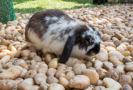 Black and white rabbit sitting  on stone floor. Cute wild bunny rabbits. Happy Easter