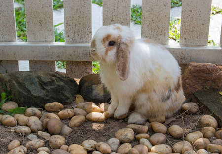 White rabbit sitting  on stone floor in the cage. Cute wild bunny rabbits. Happy Easter