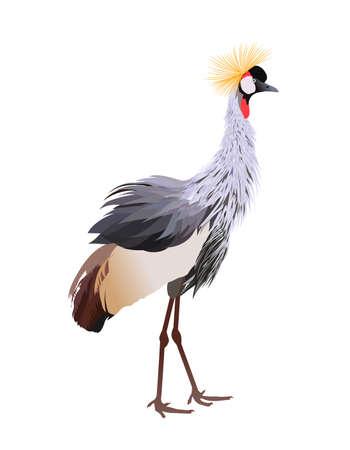 Black crowned crane (Balearica pavonina) standing.