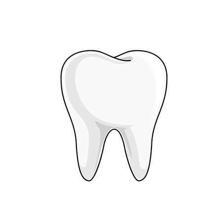 Single white and healthy tooth. Dental care concept. Icon design. Vector illustration isolated on white background.
