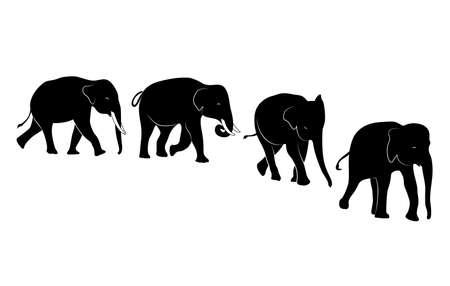 Set of silhouette walking elephant. Vector illustration isolated on white background. Illustration