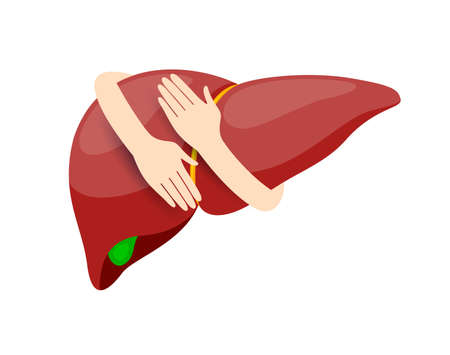 Hands embrace human liver. Health care concept. Icon design. Illustration isolated on white background.