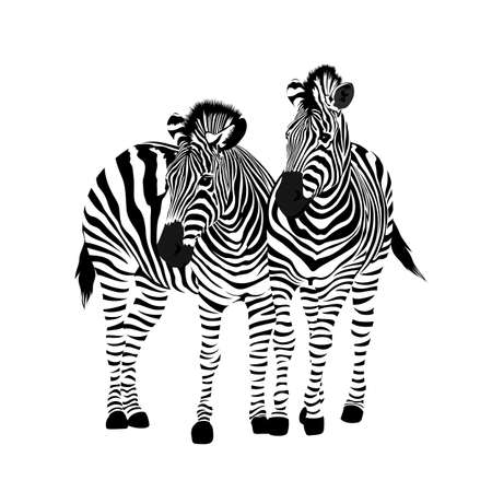 Zebra couple standing. Savannah animal ornament. Wild animal texture. Striped black and white. Vector illustration isolated on white background. Ilustracja