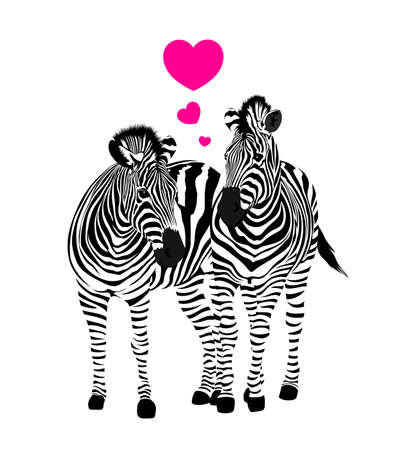 Zebra couple standing with heart. Savannah animal ornament. Wild animal texture. Striped black and white. Vector illustration isolated on white background.