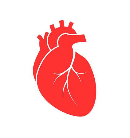 Symbol für das menschliche Herz, flacher Stil. Vektorillustration lokalisiert auf weißem Hintergrund.