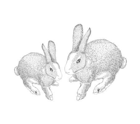 hand drawn hares, rabbit sketch.. Vector illustration on white background.