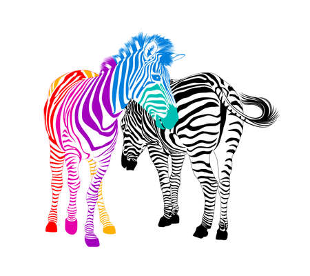 Zebra couple.  Wild animal texture. Striped black and colorful. Vector illustration. isolated on white background.