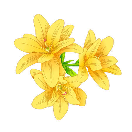 bouquet of yellow flower. Drawing with line-art on white backgrounds. Vector illustration.