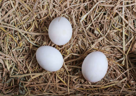 Fresh duck eggs on straw background. Top view image.