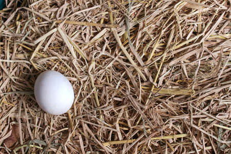 Fresh duck egg on straw background. Top view image.