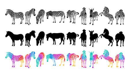 Set of zebra. Wild animal texture. Striped black and white. Colorful zebra. Illustration isolated on white background.