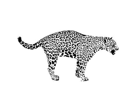 Leopard, wild cat. Wild animal print. Hand drawn illustration. for tattoo design, emblem, badge, t-shirt print. Engraving of wild animal. Classic vintage style. Illustration