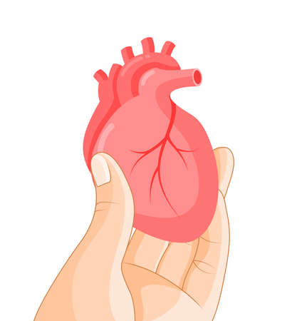 Hand holding human organ, heart. Human body part, internal organs. Health protection concept. Vector illustration isolated on white background.