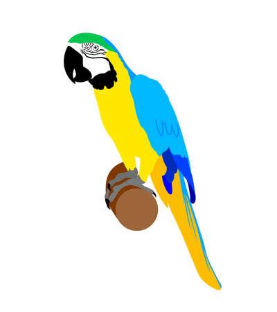 Blue and gold macaw. Parrot vector illustration. Ilustração