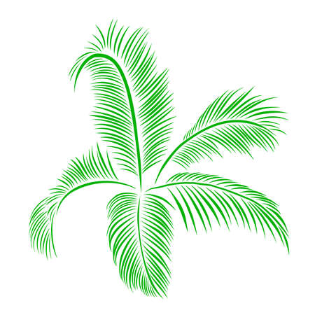 Green palm leaves botanical foliage vector illustration. Ilustração
